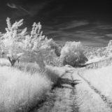 Feldweg und Obstwiese