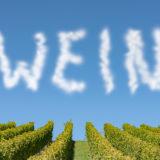 Wein als Wolke über Weinberg