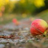 Roter Apfel Fallobst