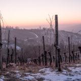 Blaue Stunde im Weinberg und Winter