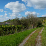 Panorama Landschaft Weinberg mit Feldweg