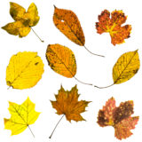 Blätter in Herbstfärbung
