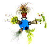 Mini planet mit fünf Pflanzen