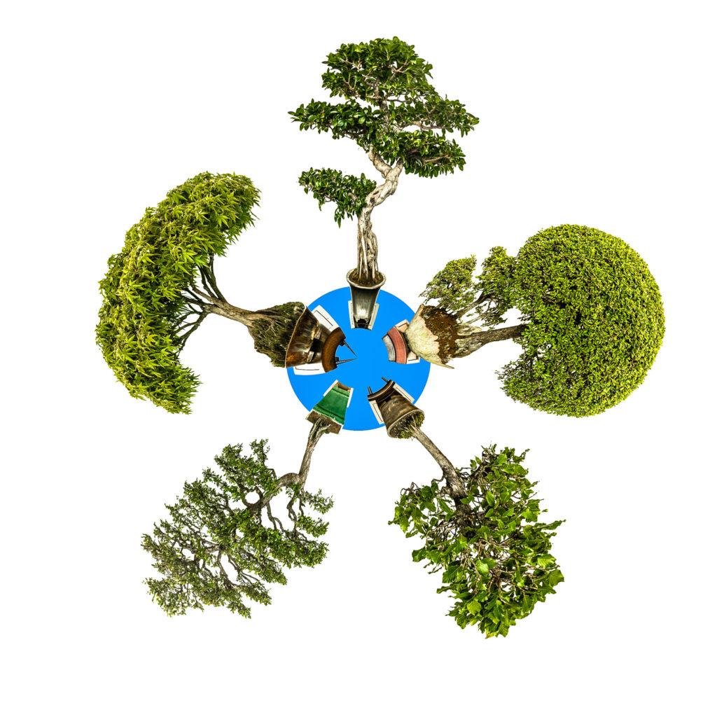 Mini Planet mit fünf Bonsai Bäumen