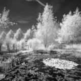 Teich in Infrarot