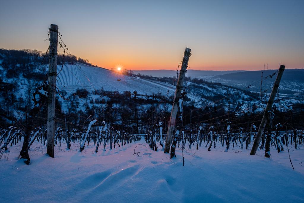 Weinberg im Winter mit Schnee